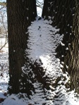 Schneekunst mit Eiche