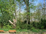 Totholz-Höhlenbaum - Grüneburgpark