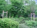 2 tote Bäume auf Odina-Bott-Platz