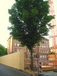 Baugrube Glauburg-Schulhof