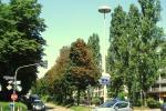 Ahorn-Baumreihe Bremer Strasse