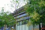 Schnurbaum auf Goetheplatz