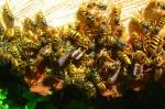 Wespen am Baumsaft