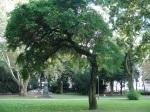 Osagedorn Nr. 96 Kirchner-Denkmal hinten