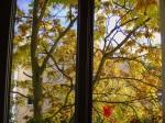 Leuchtend gelber BaumVorhang