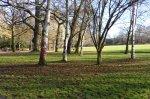 Grüneburgpark vier beschmierte Birken