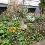 Vorgarten FrühlingsBlüher
