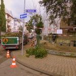 Vier Bäume weg _ Vorgarten im Westend