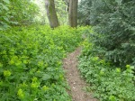 Wildpflanze gelb-grüne Blüte_Grüneburgpark