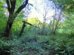 Grüneburgpark_2 abgeknickte Bäume