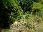 Grüneburgpark - Bäume Nr. 2446,2448