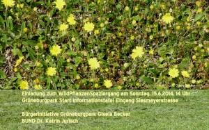 Grüneburgpark_WildpflanzenSpaziergang