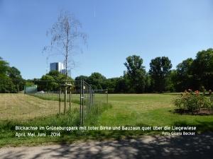 Tote Birke_Blickachse Grüneburgpark