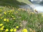 Blüten und Gräser auf 2300 m Höhe