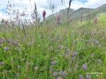 Gräser und Blüten vor Gipfeln