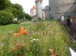 Tallin FlowerFest4