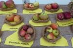 Alte Apfelsorten - Erntefest