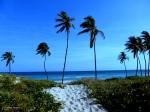 Sandstrand und Palmen -Havanna, Kuba