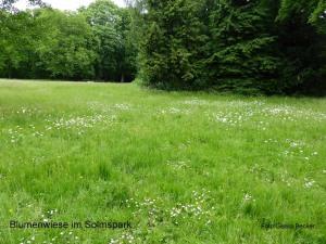 Blumenwiese Solmspark