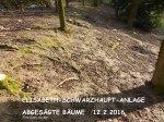E-Schwarzhaupt-Anl Kahlschlag