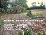 Kahlschlag Eichendorff 55